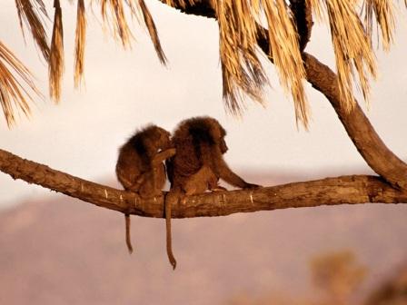 dos monos asicalandose