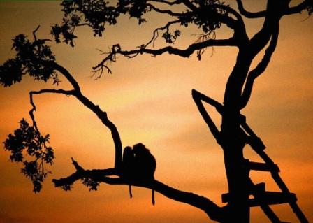 monos en el ocaso