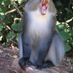 mono azul