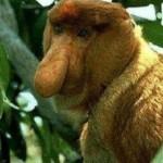 mono narigon
